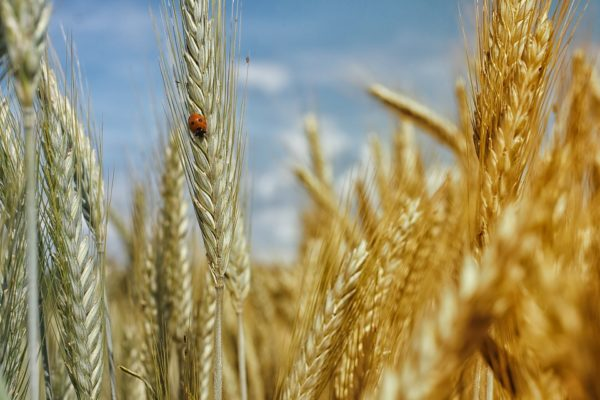 Whole Grains Month - September